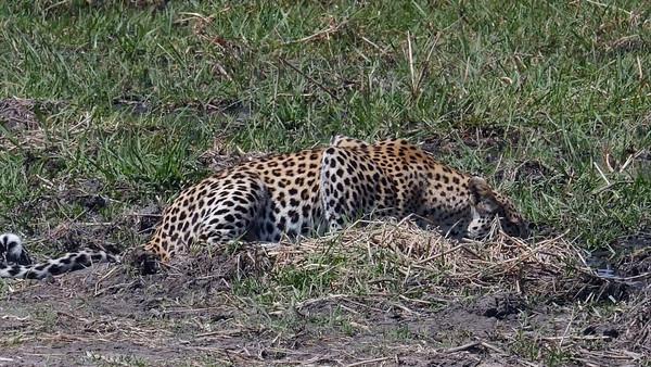 Africa safari and tour - September 2014