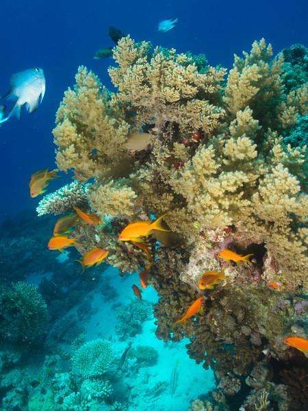 carles reef042.jpg