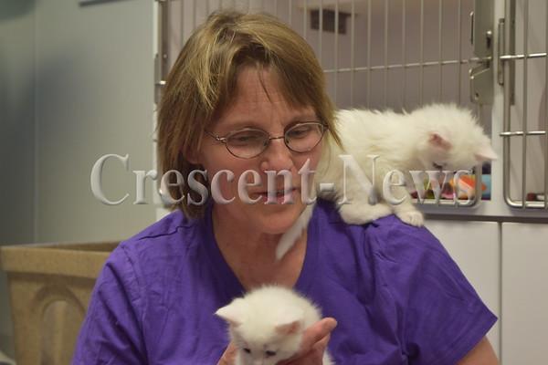 05-24-16 NEWS sg rescue cats