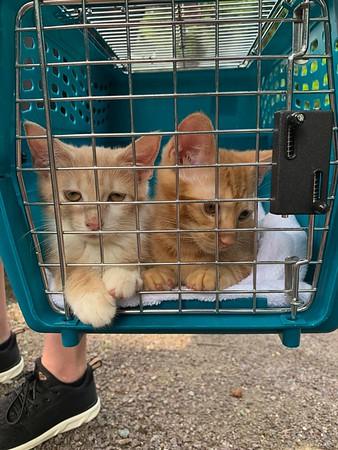 Kittens-2021