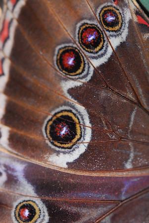 Butterflies Wisley exotics
