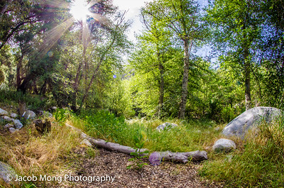 West Fork Trail (Azusa):  May 14, 2016
