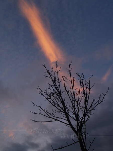 Bare tree with winter sunset streak - Quakertown, PA