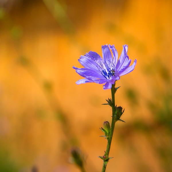 Purple Flower-7372.jpg
