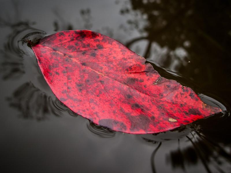 Fall, already