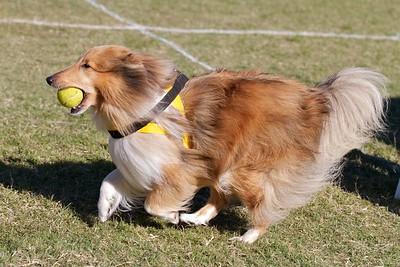 Tuggeranong Dog Training Club Inc