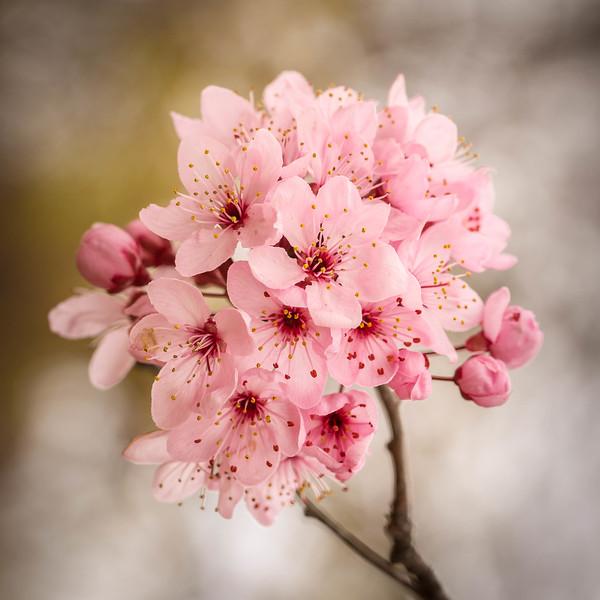 Arrowtwon Blooms