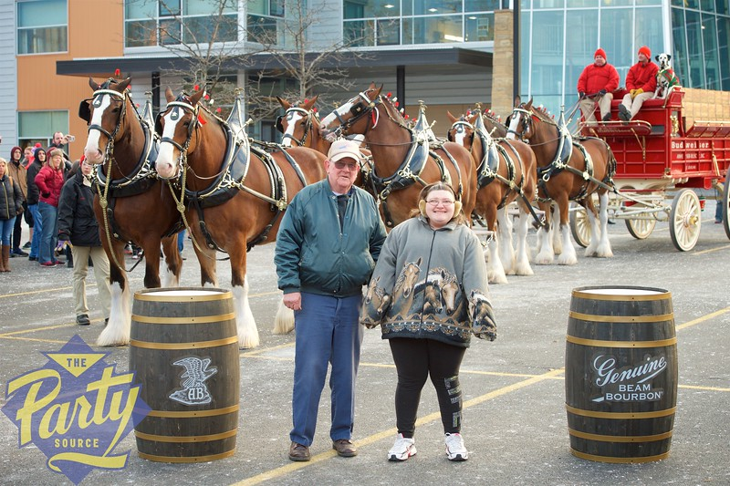 Clydesdale Portraits 162.jpg