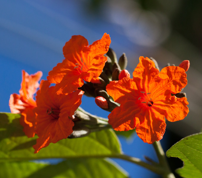 geiger flowers