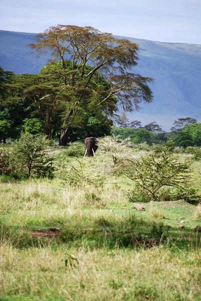 Ngorongoro (285).JPG