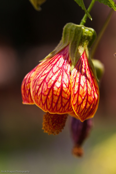A flower in the Sacred Valley, Peru.