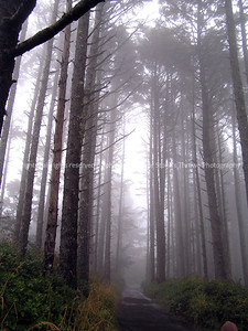 025-trees_fog-yaquina_head_or-18oct06-0016