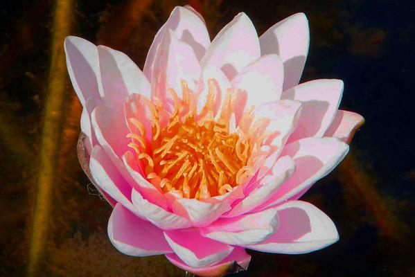 South Coast Botanic Garden_092213