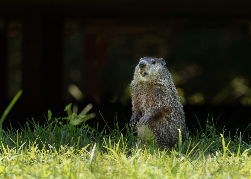 20180713-Groundhog218-Edit Full Size.jpg