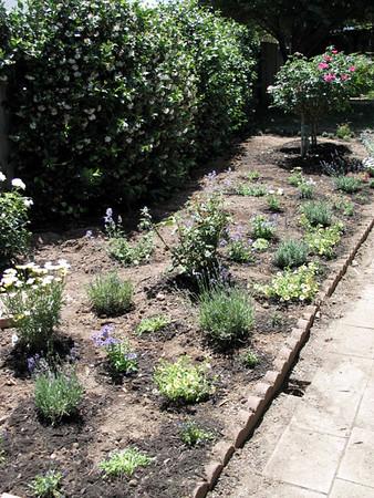 Garden July 03