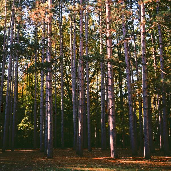 Autumn Hike 120 Film-00057.jpg
