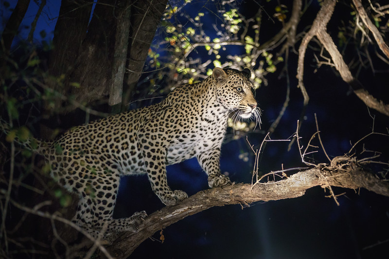 LeopardHills-20171022-1046.jpg