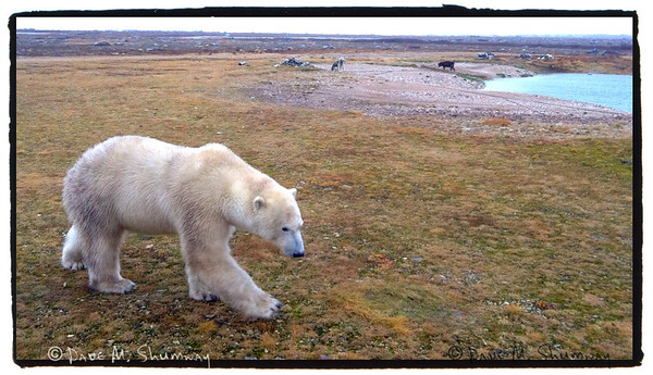 Canadian Arctic, October 12-19, 2011