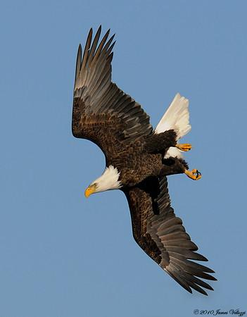 Eagles & Vultures