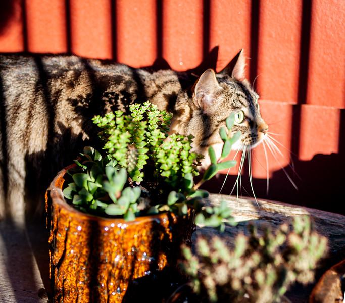 Patio cat-1288.jpg