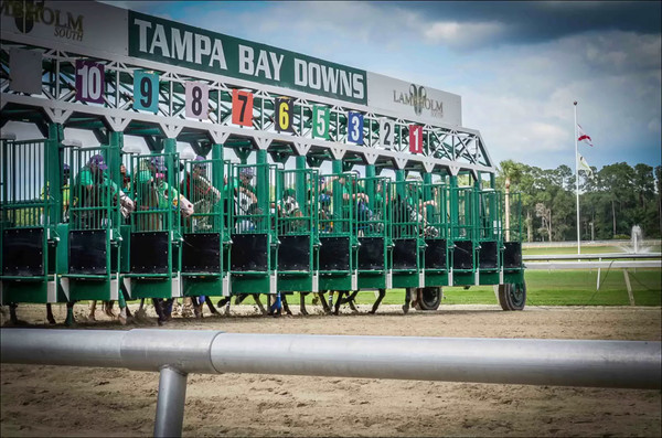 Tampa Downs
