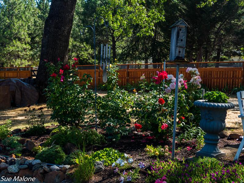 Early July Gardens-10.jpg
