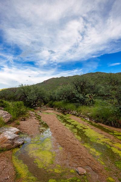 The Algae River