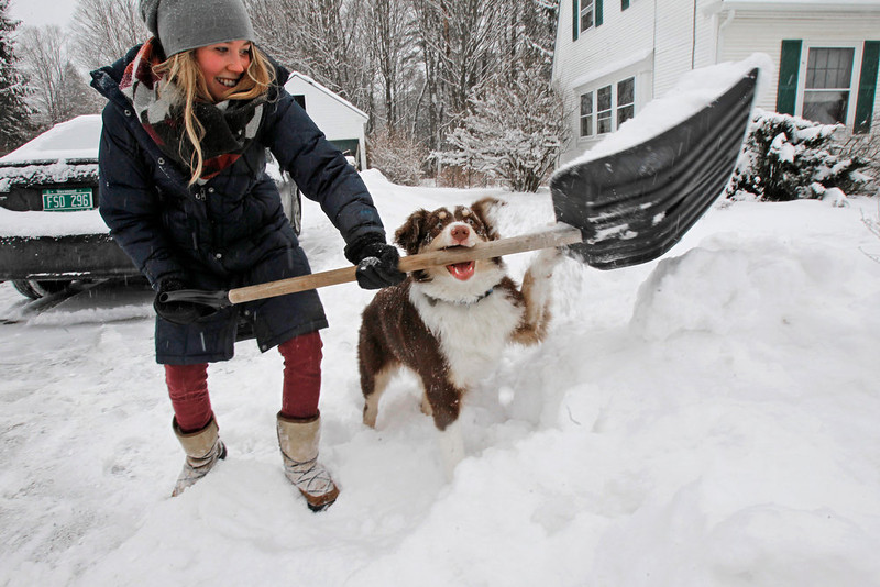 . Lilah Watt gets some interference from her 6-month-old puppy, Willa, as she shovels out from the snowstorm on Friday, Feb. 8, 2013 in Montpelier, Vt. (AP Photo/Toby Talbot)