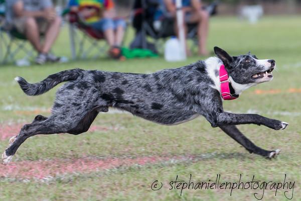 _MG_3190Up_dog_International_2016_StephaniellenPhotography.jpg