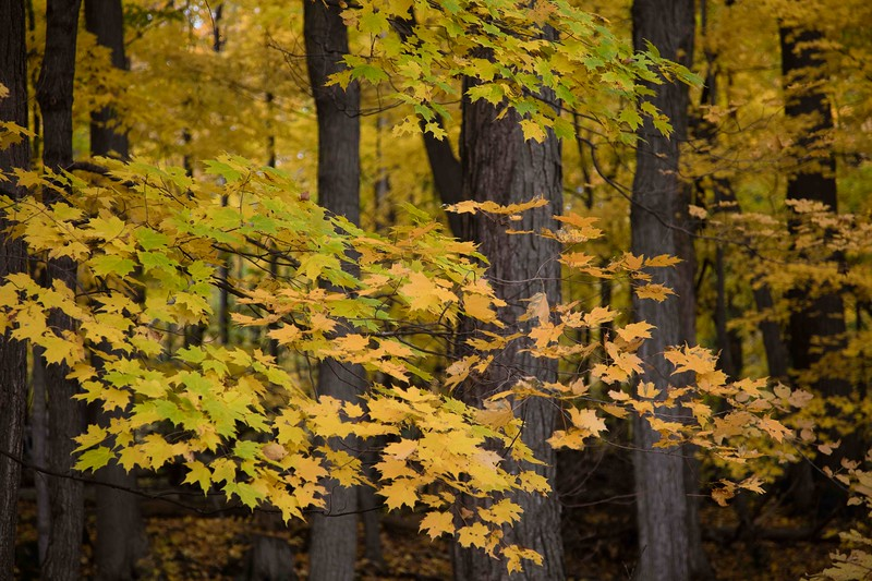 autumn 2015_-9.jpg
