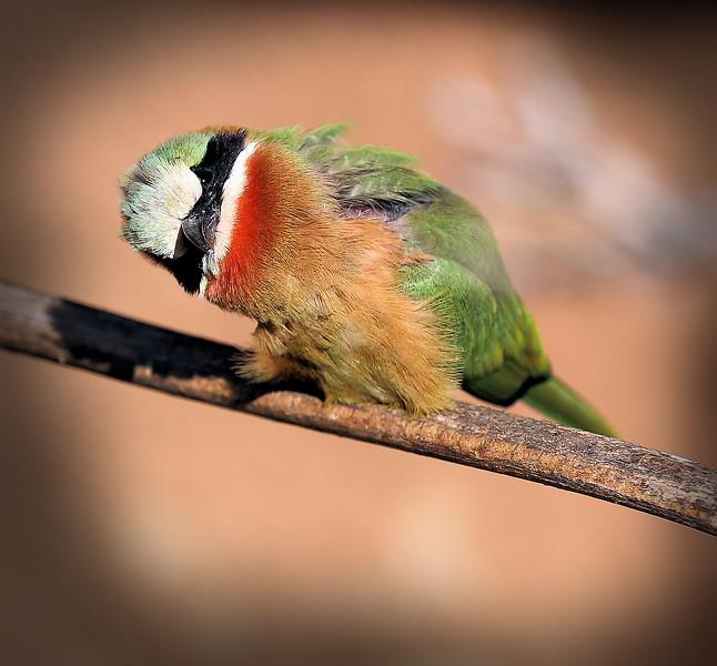 IMG_5011 Africa Rocks Bird 12.30.2018 I See You.jpg