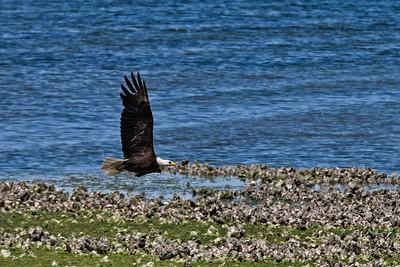 Seabeck Eagles June 2020