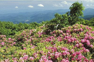 NORTH CAROLINA - BLUE RIDGE PARKWAY - FLORA / FAUNA