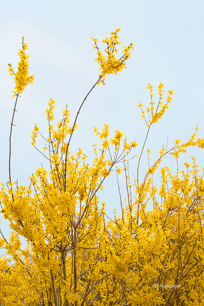 April 11_Spring's Gold_1164hp.jpg