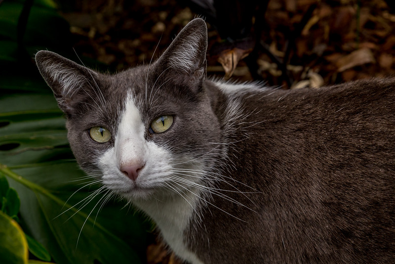 Frankie, die Hauskatze von Gaby und Tom Weber