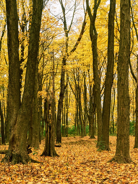 DuPage Woods Yellow Canopy 3.jpg