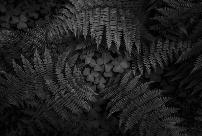 fernFunnel_4K_black_white.jpg