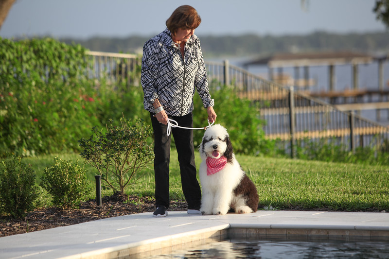Creature Comfort Pet Services, Laura with Sheepadoodle Sade, Jacksonville Florida