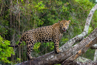 Brazil-The Pantanal