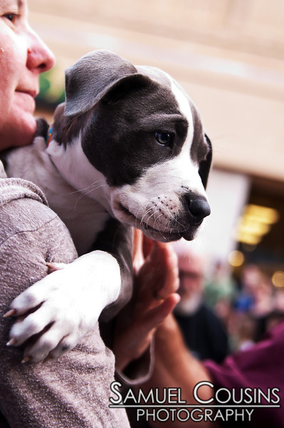 This puppy did not like the parade.