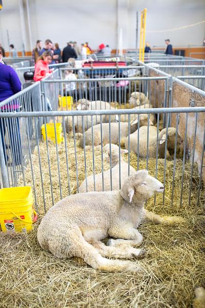Farm Show-139.jpg