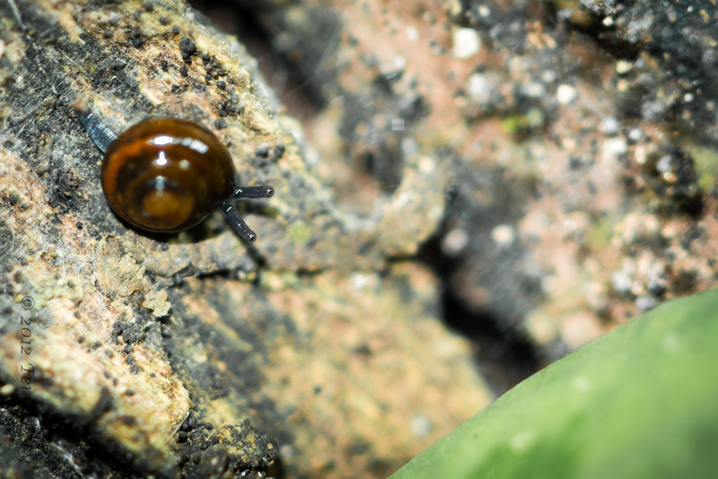 Most of the snails I saw 1/2 cm or less...if you look hard you can see the eyeball at end of antennae