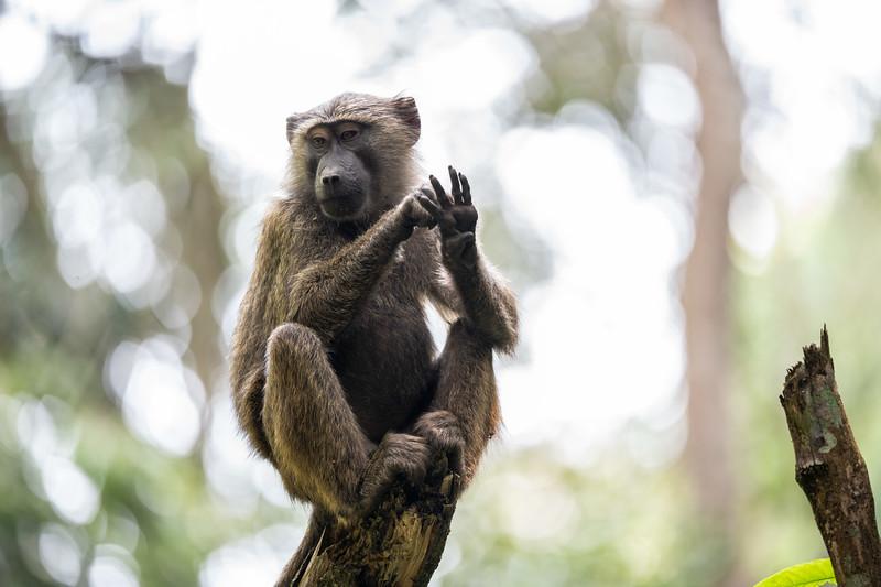 Uganda_T_Chimps-1504.jpg