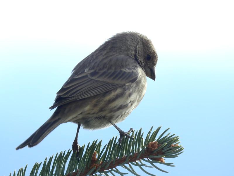 birds (142).JPG