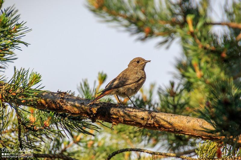 ptica6.jpg
