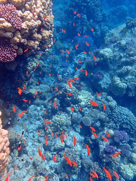 Marsa Alam, Red Sea, Egypt