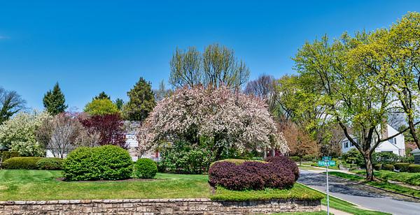 The Rose Garden, 4-28-20 (D780)