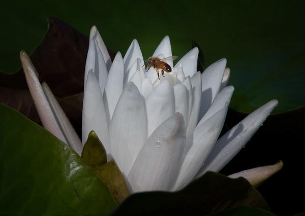 Blue Heron Wetlands Flowers - September 3, 2021
