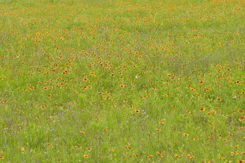 Prairie View 2 May 2020-04898.jpg