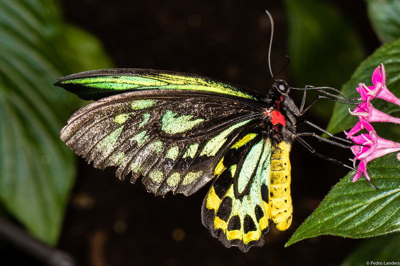 Butterfly Place 8